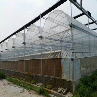 Hydroponic galvanized auto-control film/plastic greenhouse for tomato/romaine lettuce/strawberry