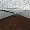 Cheap Price Arch Greenhouse for Vegetable
