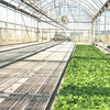 Greenhouse Farming Agriculture Equipment Benches