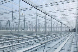 Galvanized Steel Greenhouse for Agriculture