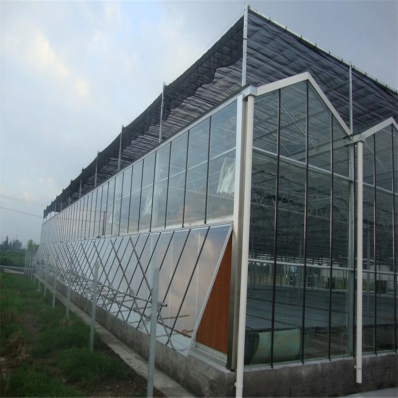 Venlo Hydroponic greenhouse with high quality outside shade System Multi-span Agricultural Greenhouse for Vegetables/flowers/fruits/garden/tomato/crop/corn