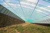 Film covered greenhouse with hydroponic