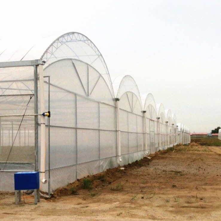 Best Price Multispan Agricultural Plastic Film Greenhouse for Vegetables/Fruits/Flowers/Garden/Farming