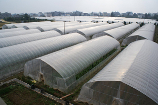 Tunnel agriculture film/plastic greenhouse for sale