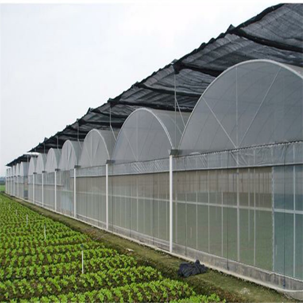Multi Span PC Sheet Arch Type Greenhouse for Commercial Picking Garden