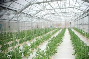 Agriculture Greenhouse Hydroponic Growing Nutrients Systems