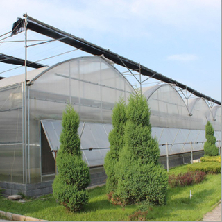 Professional Multi-span Steel Structure Plastic Film Greenhouse with Hydroponics for Vegetable/Tomato/Cucumber Growing