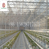 Galvanized Steel Greenhouse Structure for Vegetables