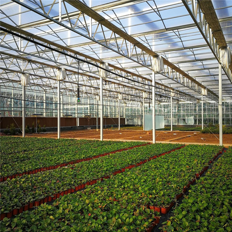 Cheap inside shade System Commercial Multi-span Agricultural Hydroponic Greenhouse for Vegetables/flowers/fruits/garden/tomato/crop/corn