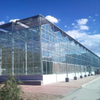 Agriculture Commercial Venlo Glass Greenhouse for Tomato