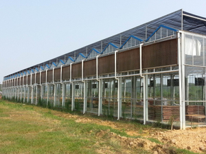 Greenhouse Cooling System on cooling pad with exhaust fans