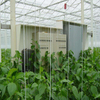 Hot sale Automated Greenhouse Environment Control System Venlo Greenhouse Agricultural Greenhouse for Vegetables/flowers/fruits/garden/tomato/crop/corn