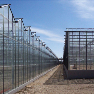 Hot Sale Venlo Tempered Glass Greenhouse With Hydroponic Growing System