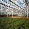 Venlo Steel Structure Multi-span Hydroponic Polycarbonate Agricultural Greenhouse for Vegetables/flowers/fruits/garden/tomato/crop/corn